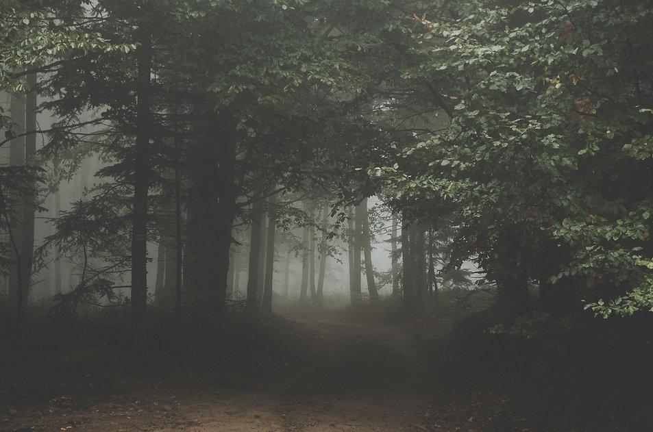 a dark forest with fog.