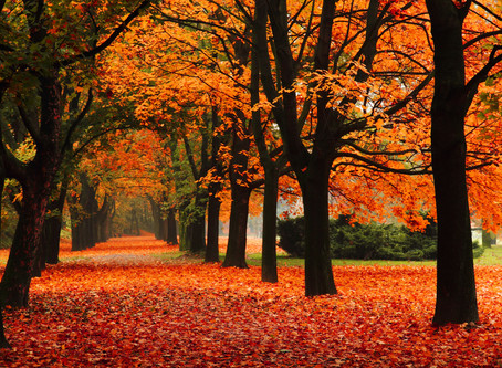 Fall Checklist for Your Home