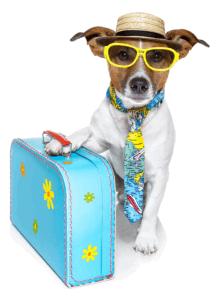 PET Travelling , Pet Insu