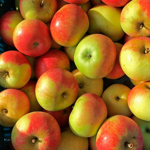 ORGANIC FRUIT - Apples 500g