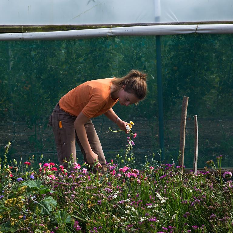 Flourish & Friends Midsummer Farm Tour & Picnic