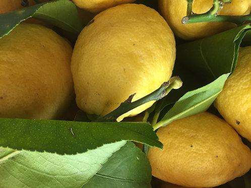 Amalfi Lemons 1kg - LA SOVRANA