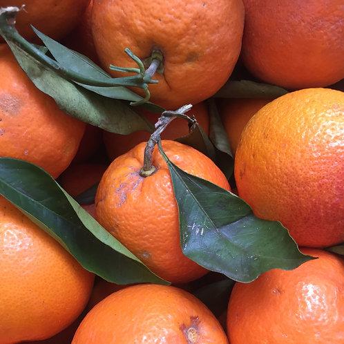 Oranges 1kg - Tarocco Blond LA SOVRANA