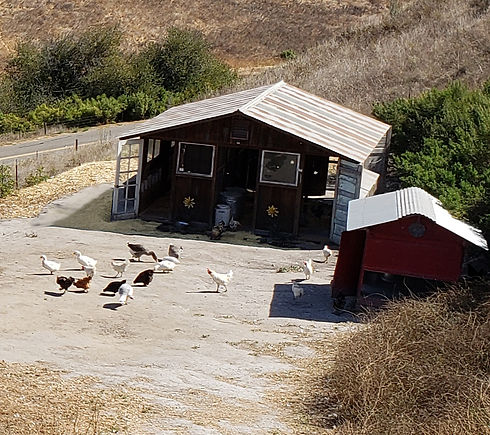 Chicken Area.jpg