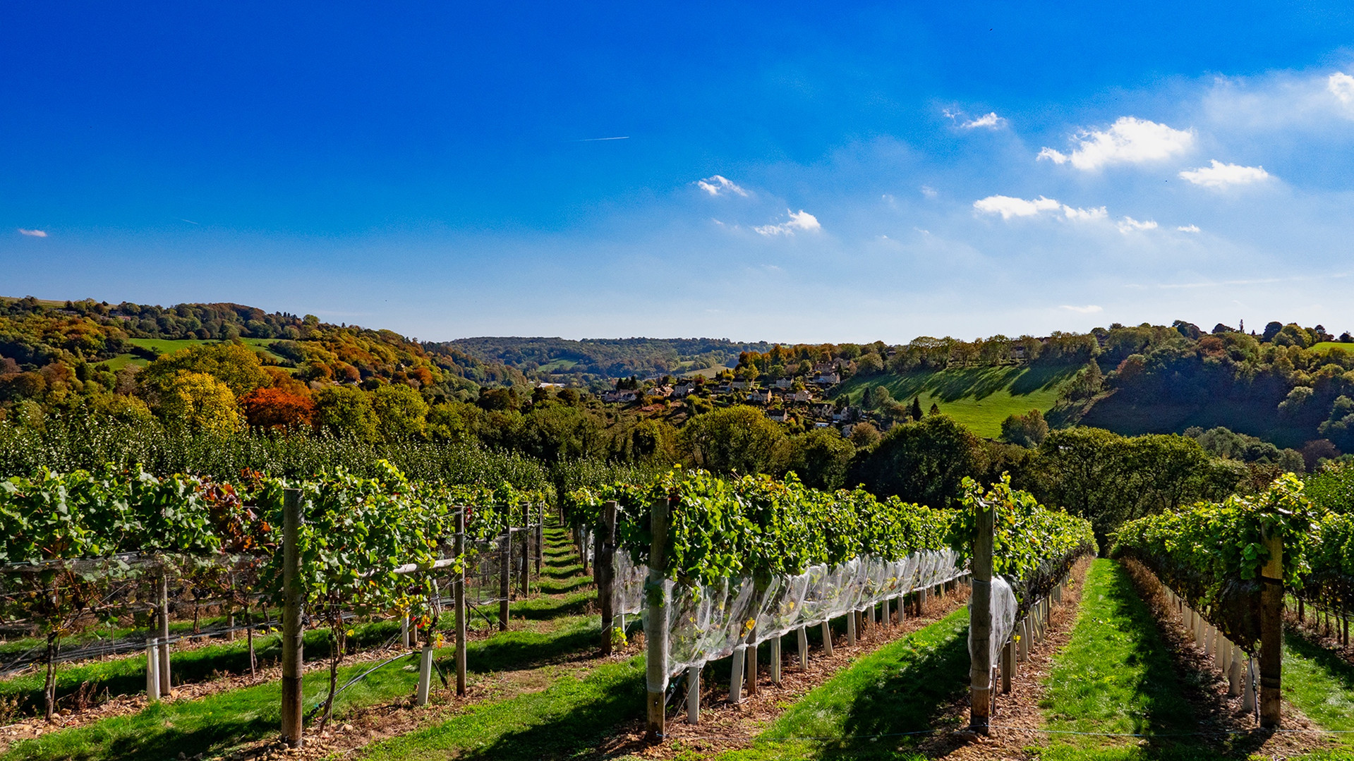 Woodchester Valley Vineyard & Winery