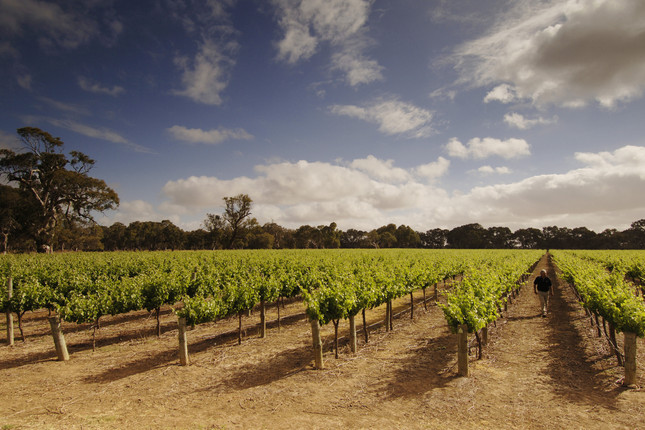 111007_Langhorne Creek Vineyards.jpg