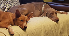 Ginger and Baxter.jpg