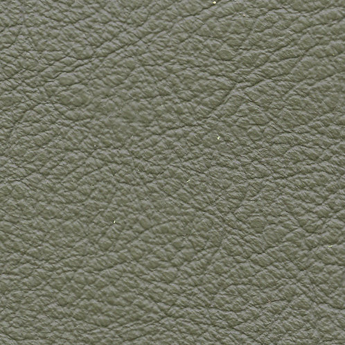 Birch Lichen