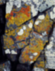 lichenandrock.jpg
