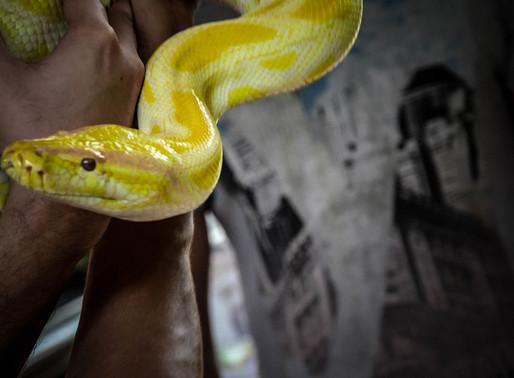 La Thailandia e i serpenti, leggende e tradizioni