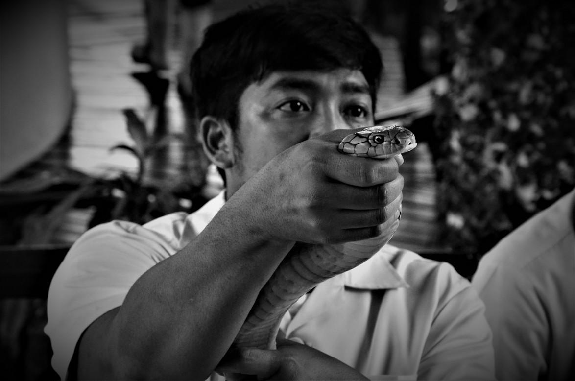 serpenti_4_bn