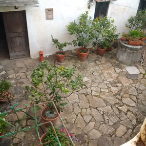 Looking down from our kitchen window was Mimma and Duccio's courtyard, filled with flowers and lemon trees.