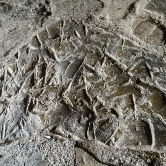 More fossil stone, floor of the studio.