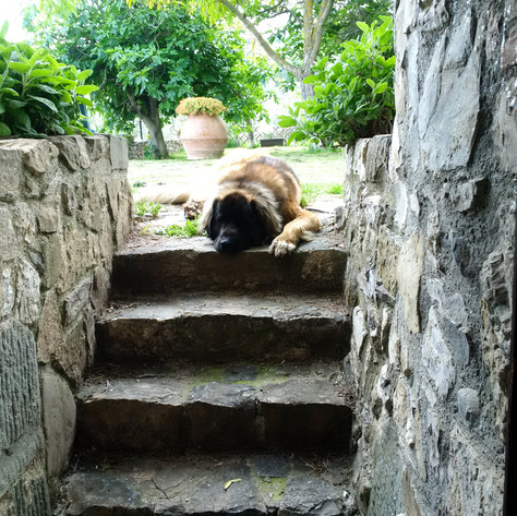 Hugo paiently waited at the top of the stairs of the garden entrance to the studo.