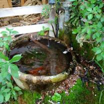 Nature's very own art, in Mimma's garden.