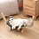 Thumbnail: Cat Hammock Bed