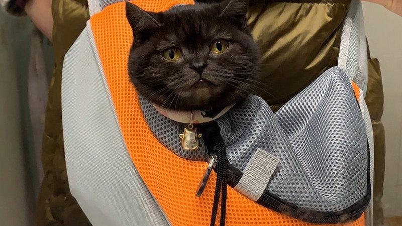 Pet Cat Carrier for Cats Sling Bag Shoulder Bags