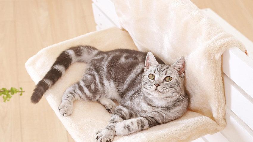 Cat Bed Removable Window Sill Cat Radiator