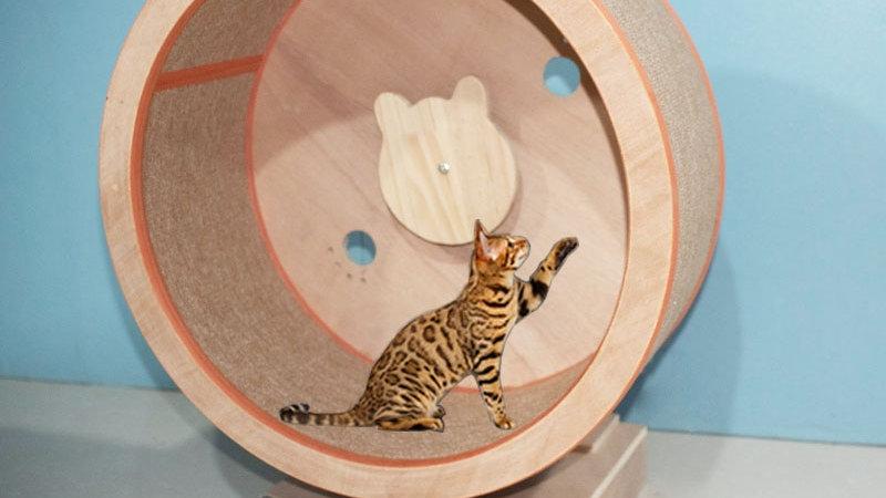 Cat Climbing Frame Solid Wood Cat Scratch Treadmill Wheel