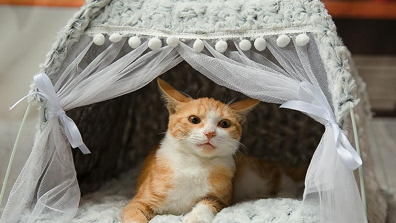 Winter Warm Cat Bed Foldable Small Tent House