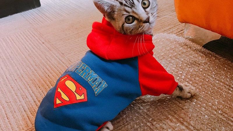 Cartoon Cat Hoodie Sweater Winter Warm