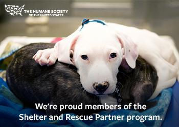 banner-350x250-shelter-partner-dog.jpg
