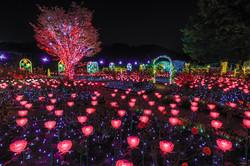 5 ashikaga Frower Park (1)