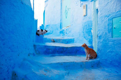 Chefchaouen-the-Ancient-Blue-City-in-Morocco-7