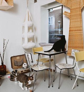 1._Kattencafe_Kopjes_(Kopjes_Cat_Café)-2.jpg