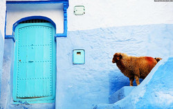 Chefchaouen-the-Ancient-Blue-City-in-Morocco-17