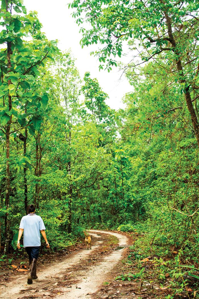 เดินป่าหาเห็ดถอบ