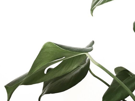 How to care for your indoor plants.