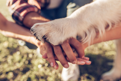 Hands and paws of all family members. Father, mother, daughter and dog are taking hands to