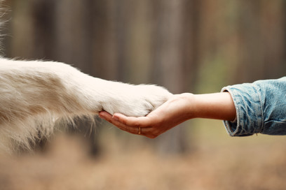 Dog is giving paw to the woman. Dog's paw in human's hand. Domestic pet..jpg
