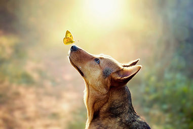 a butterfly rests on the nose of a wolf
