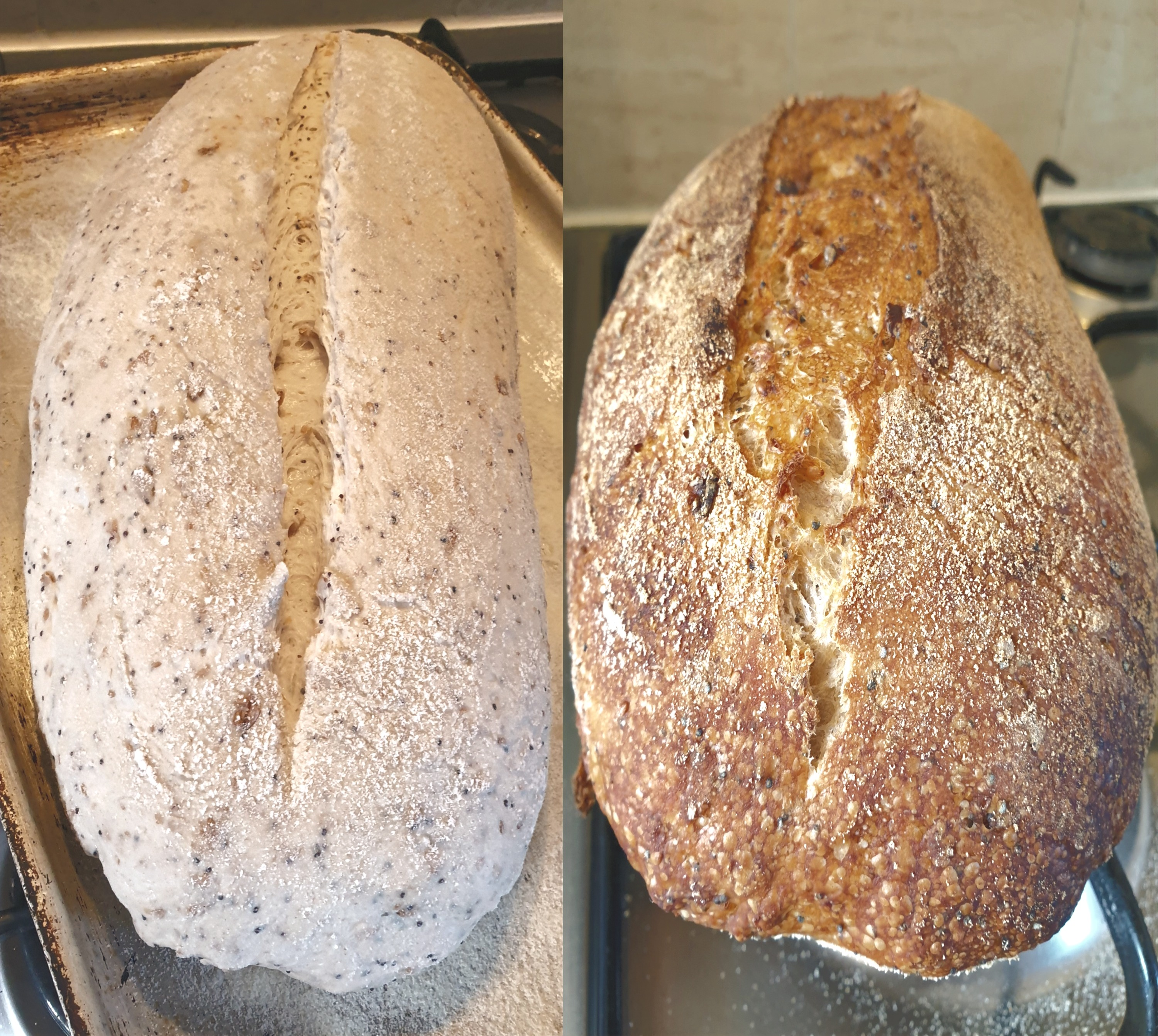 Sourdough%20before%20%26%20after_edited.