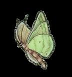 Moth_edited-3.png