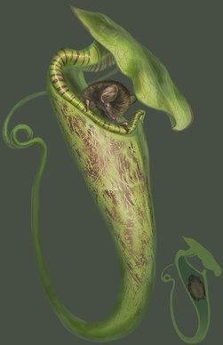 Pitcher Plant and Bat