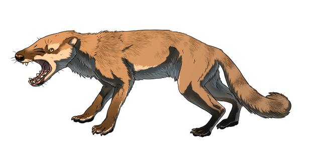 Hyaenodon mustelinus