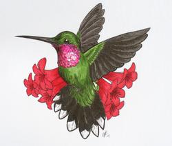 Birthday Hummingbird