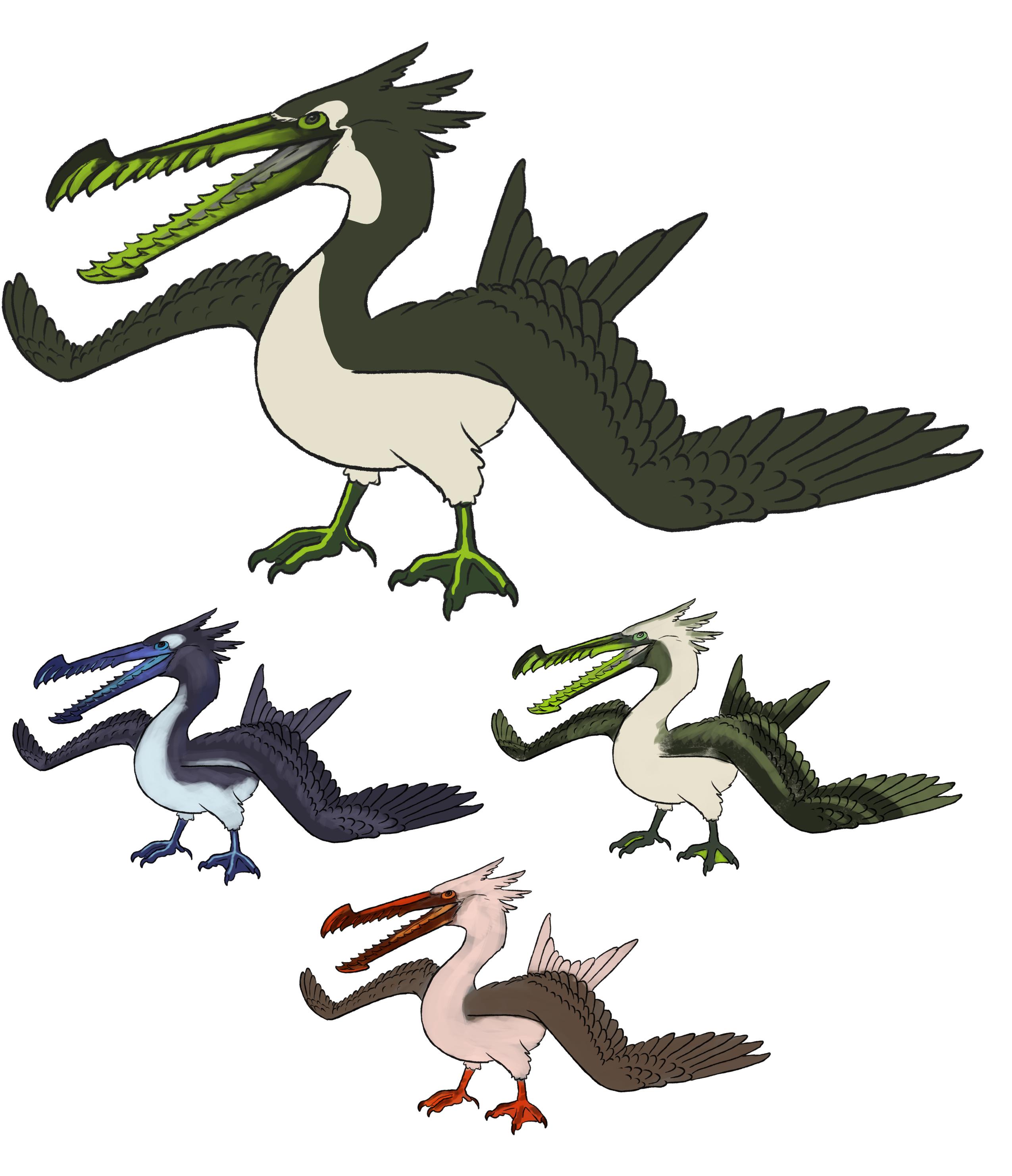Pelaccipiter Seabird Creature