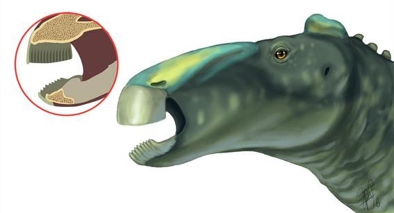 Hadrosaur Beak