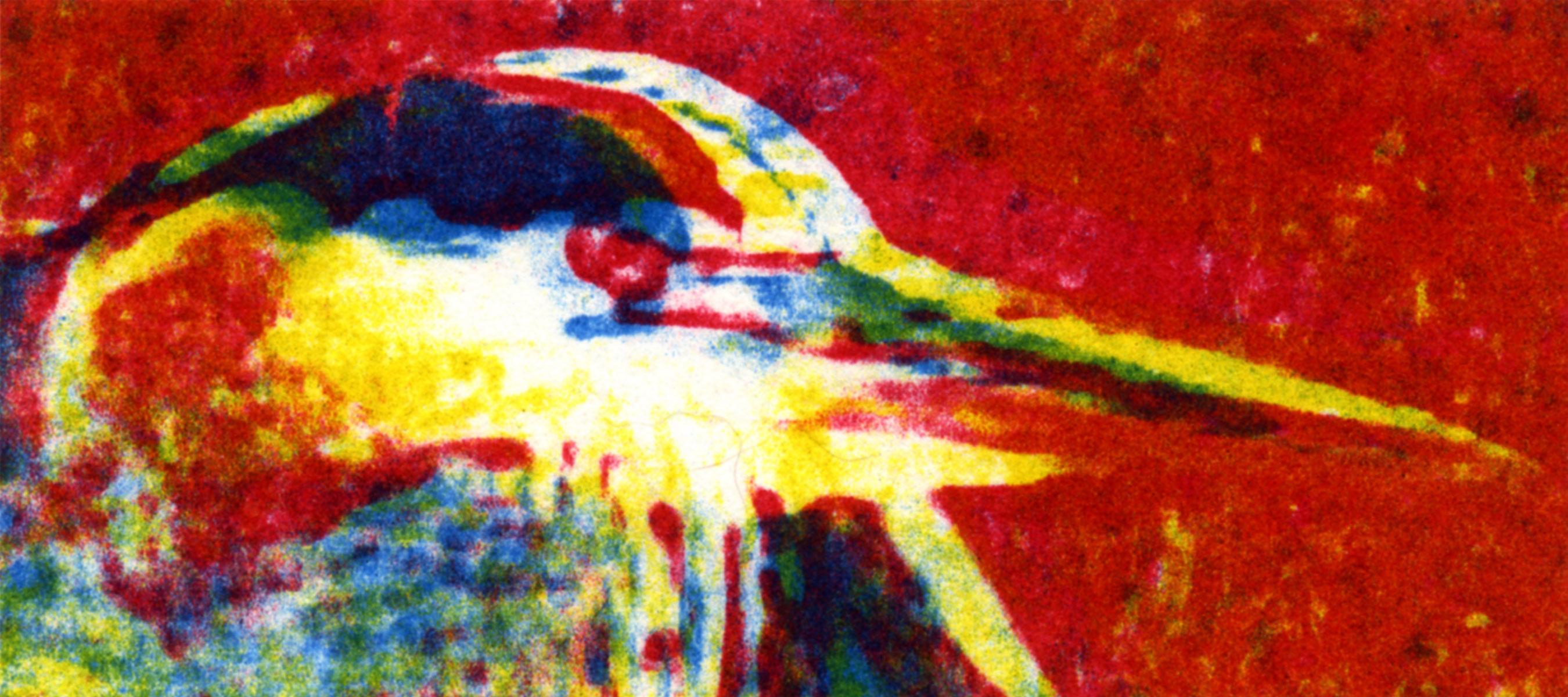 Naushon Shore Bird