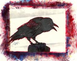 Corvus V