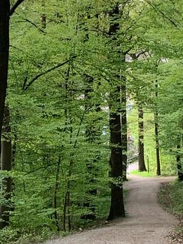 Wald vor der Haustür lädt zu wunderbaren Spaziergängen oder zum Verweilen ein