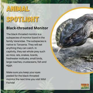 Animal spotlight.PNG