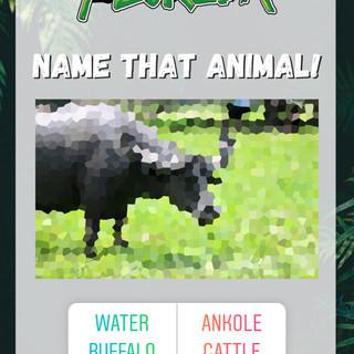 Guess the animal.JPG