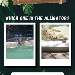 Croc or gator.JPG
