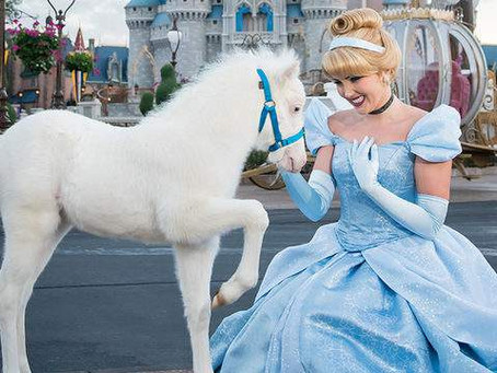 Meet the newest addition to Cinderella's royal horses