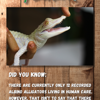 Did you know.png